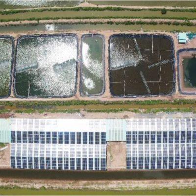 Hệ thống điện mặt trời hòa lưới 538 kWp tại Ao tôm – Tiền Giang